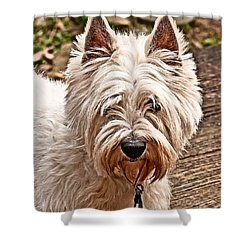 Shower Curtain featuring the photograph West Highland White Terrier by Robert L Jackson