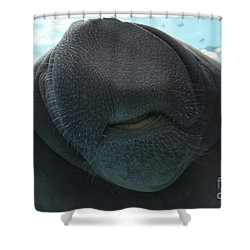 West Indian Manatee Smile Shower Curtain