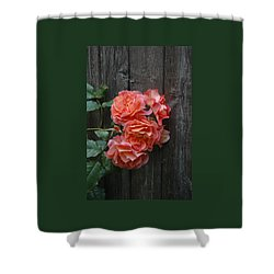 Westerland Rose Wood Fence Shower Curtain by Tom Wurl