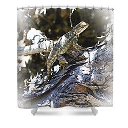 Western Fence Lizard Aka Blue-belly Lizard Shower Curtain
