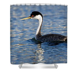 Shower Curtain featuring the photograph Western Grebe by Jack Bell