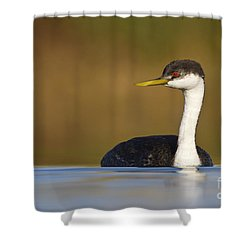 Shower Curtain featuring the photograph Western Grebe On The Lake by Bryan Keil