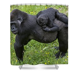 Western Lowland Gorilla 2 Shower Curtain