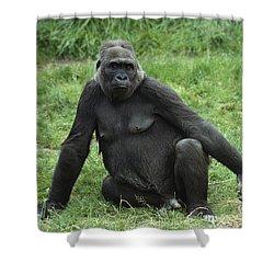 Western Lowland Gorilla Female Shower Curtain by Gerry Ellis