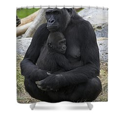 Western Lowland Gorilla Mother And Baby Shower Curtain by San Diego Zoo