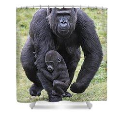 Western Lowland Gorilla Walking Shower Curtain by Duncan Usher