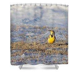 Western Meadowlark Shower Curtain by Alan Hutchins