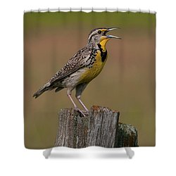 Western Meadowlark.. Shower Curtain