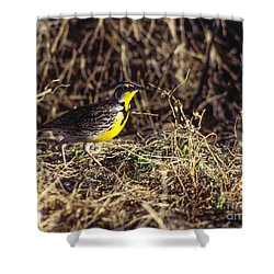 Western Meadowlark Shower Curtain by Steven Ralser