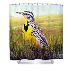 Western Meadowlark Shower Curtain by Tom Chapman
