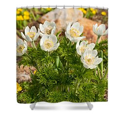 Shower Curtain featuring the photograph Western Pasqueflower And Buttercups Blooming In A Meadow by Jeff Goulden