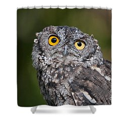 Western Screech Owl No. 3 Shower Curtain