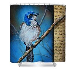 Western Scrub Jay Shower Curtain
