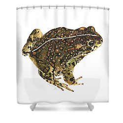 Western Toad Shower Curtain by Cindy Hitchcock