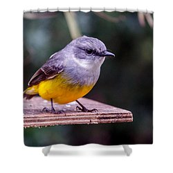 Western Yellow Robin Shower Curtain