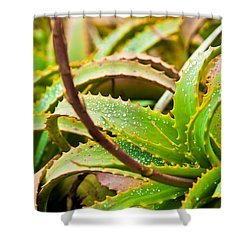 After The Rain Shower Curtain by Melinda Ledsome
