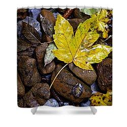 Wet Autumn Leaf On Stones Shower Curtain