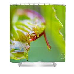 Wet Grape Leaf  Shower Curtain