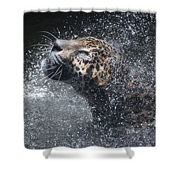 Shower Curtain featuring the pyrography Wet Jaguar  by Shoal Hollingsworth