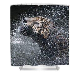 Wet Jaguar  Shower Curtain