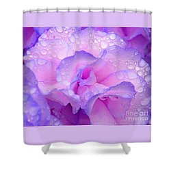 Wet Rose In Pink And Violet Shower Curtain