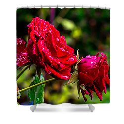 Wet Rose Shower Curtain