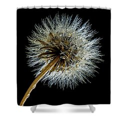 Wet Weed Shower Curtain by Jean Noren