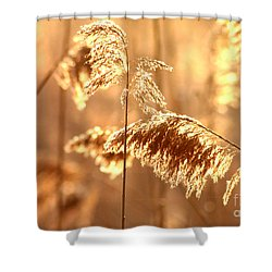 Wetland Sunrise Shower Curtain