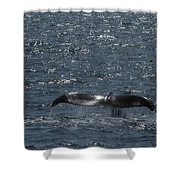 Whale Action Shower Curtain by Karol Livote