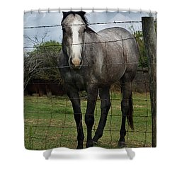 Shower Curtain featuring the photograph What Are You Afraid Of by Peter Piatt