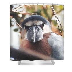 Funny Bird Face Shower Curtain by Belinda Lee