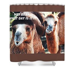 Camel What Day Is It? Shower Curtain
