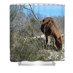 Shower Curtain featuring the photograph What Do I See Here? by Photographic Arts And Design Studio