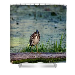 Shower Curtain featuring the photograph Whatcou Lookin' At? by David Porteus