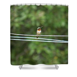 Whats You Talkin Bout  Shower Curtain by Nick Kirby