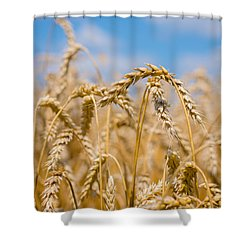 Wheat Shower Curtain by Cheryl Baxter