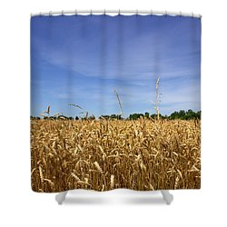 Wheat Field II Shower Curtain