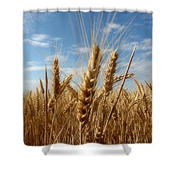 Wheat Field In A Sunny Summer Day Shower Curtain