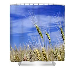 Shower Curtain featuring the photograph Wheat Trio by Keith Armstrong