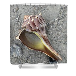 Whelk With Sand Shower Curtain