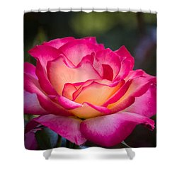 Shower Curtain featuring the photograph When It's Love by Patricia Babbitt