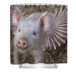 When Pigs Fly Shower Curtain by Rick Mosher