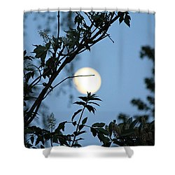 Shower Curtain featuring the photograph Where Are The Fairies by Jeanette C Landstrom