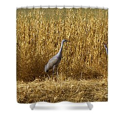 Where Is The Corn Shower Curtain by Mike  Dawson