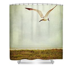Where To Go? Shower Curtain by Trish Mistric
