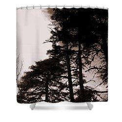 Whispering Trees Shower Curtain by Salman Ravish