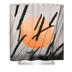 Shower Curtain featuring the photograph Whispers by Charlotte Schafer