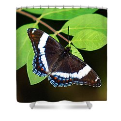 White Admiral Butterfly Shower Curtain by Christina Rollo