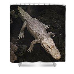 White Alligator Shower Curtain