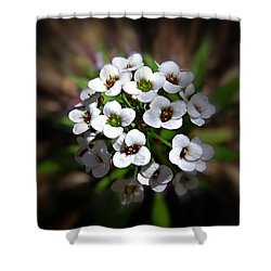 Shower Curtain featuring the photograph White Alyssium by Nick Kloepping